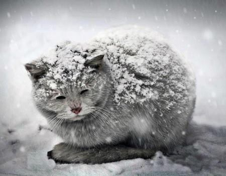 cold-kittycatjpg