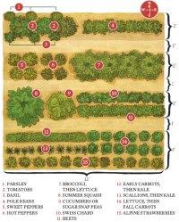Starter-Vegetable-Gardens2