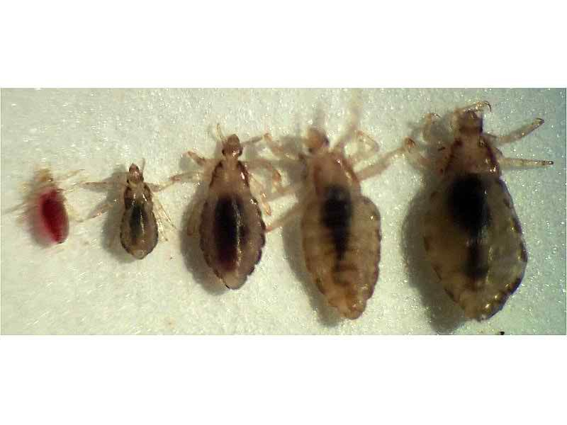 Bed Bugs Salvationcanada