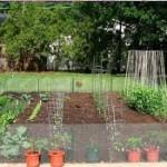 Garden-2-150x150